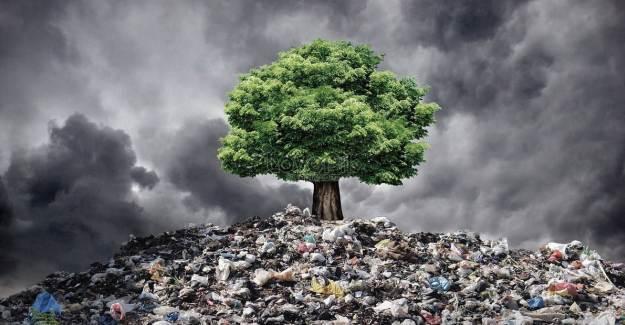 Çevre Kirliliği Sebebiyle 13 Milyon Canlı Türü Tehlikede